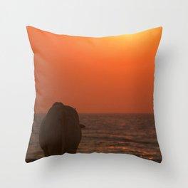 Cow Watching the Sunset Arambol Throw Pillow