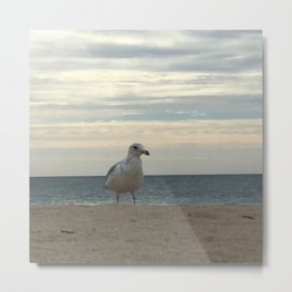 Kevin the Seagull Metal Print