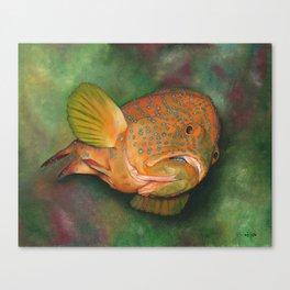 Coral Grouper Canvas Print