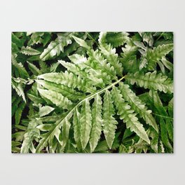 Lush Ferns Canvas Print