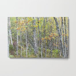 The lowest trees have tops Metal Print