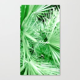 HAIRY COLLECTION (17) Canvas Print