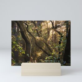 Sunset in the Forest Mini Art Print