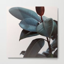 Night Ficus #1 Metal Print