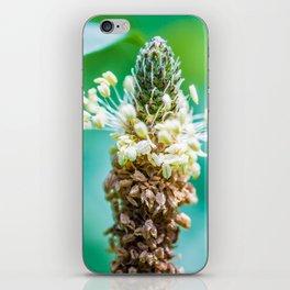 Macro of Ribwort Plantain wild plant pollen iPhone Skin