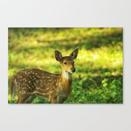 Little Bambi Deer Canvas Print