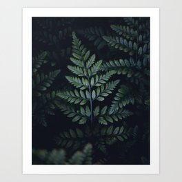 Evening Shadows Art Print