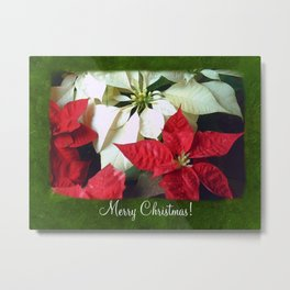 Mixed Color Poinsettias 2 Merry Christmas P1F1 Metal Print