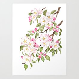 botanical pink apple blossom flowers watercolor Art Print