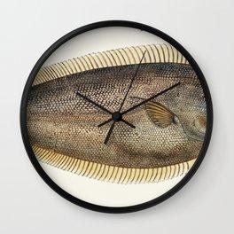 Antique fish New Zealand Sole drawn by Fe Clarke (1849-1899) Wall Clock