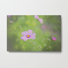 . delicate cosmo . Metal Print