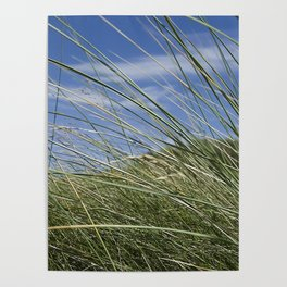 Green grass and blue sky Poster