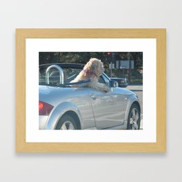 Happy dog in convertible Framed Art Print