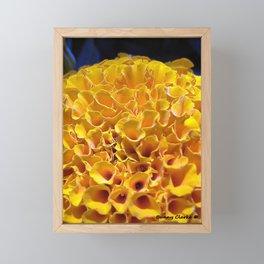 Pom Pom Marigold Framed Mini Art Print