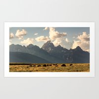 The Bison of Jackson Hole Art Print