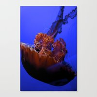 jelly fish Canvas Prints featuring Jelly Fish Jelly Fish  by EmmaTeele