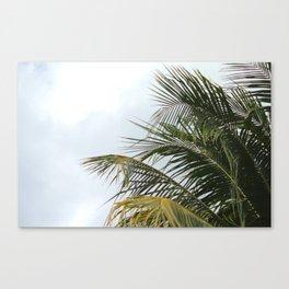 PALMY Canvas Print