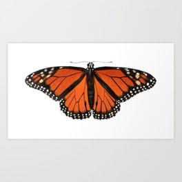 Monarch (Danaus plexippus) Art Print