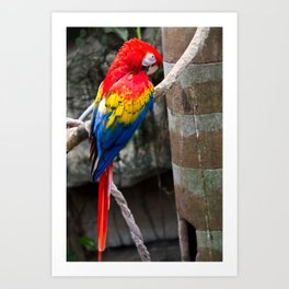 The Real Macaw Art Print