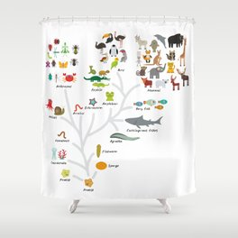 Evolution in biology, scheme evolution of animals on white. children's education back to scool Shower Curtain