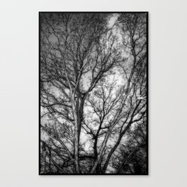 Tree Dreams Canvas Print