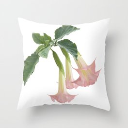 Angel's Trumpet Flowers isolated on white background Throw Pillow