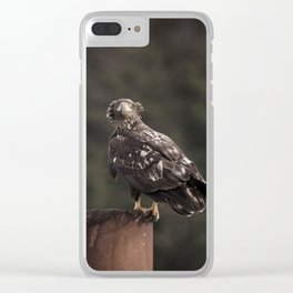 An Immature Bald Eagle Gets Hit by Wind at the Nehalem Bay State Park Boat Launch in Oregon Clear iPhone Case