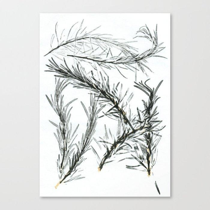 Rosemary Canvas Print