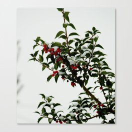 Snow-Kissed Holly Canvas Print