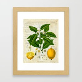 Lemon Botanical print on antique almanac collage Framed Art Print