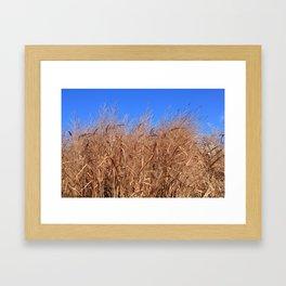 Autumn Grasses Under a Clear Blue Sky Framed Art Print