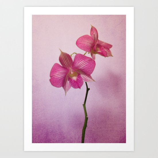 Pink on Pink Orchids Art Print