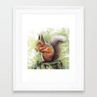 squirrel Framed Art Prints featuring Squirrel by Olechka