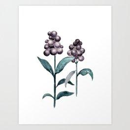 Watercolor Privet Fruit Berries Art Print