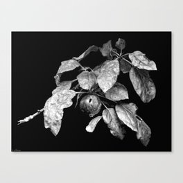 Magnificently Wounded Canvas Print