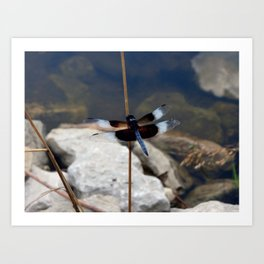 Dragonfly Friend Art Print