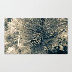 Spruce Pine Canvas Print