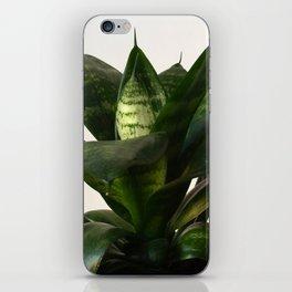 Sansevieria iPhone Skin
