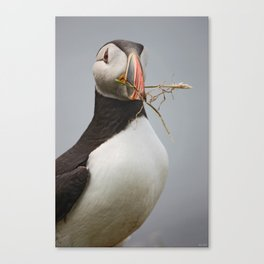 "[impressions of scotland] - puffin ""home builder"" Canvas Print"