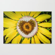 Sunflower of Love Canvas Print