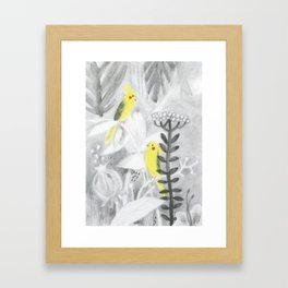 Calopsittes Framed Art Print
