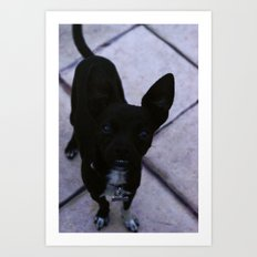 Just Dog  Art Print