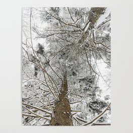Snowy trees from bellow Poster