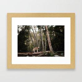 Husky in Forest Framed Art Print