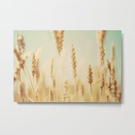 the wheat field ... Metal Print