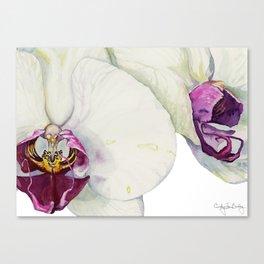 Cream & Fuchsia Phalaenopsis Orchids Canvas Print