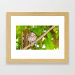 Merle Framed Art Print