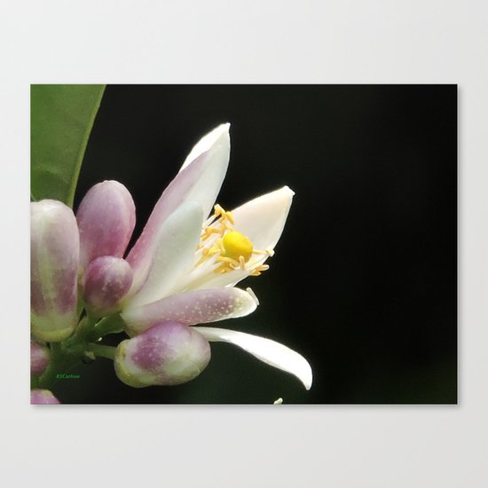 Lemon Buds Canvas Print