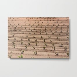 Wine stocks Metal Print