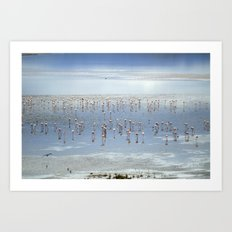 Flamingos at the blue lake Art Print
